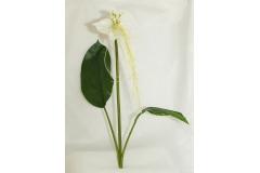 Ramo Di Orchidea Bianca Tacca Con Foglie Da 85 Cm