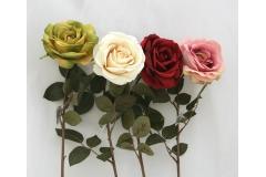 Rosa Singola Venus
