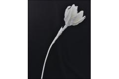 Magnolia Avorio Alta 90 Cm Diametro 20 In Foam