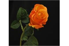 Bocciolo Di Rosa Intuito Seta Foglie Modellabile 55 Cm