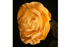Rosa Touch Gambo Lungo 75 Cm