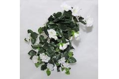 Cadente Di Petunia Bianca