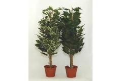 Pianta Artificiale Ficus Benjamin Con Vaso 65 Cm