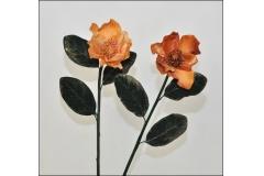 Magnolia Ellisse