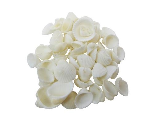 Conchiglie Clam Rose Mini Ventaglio Kg 1