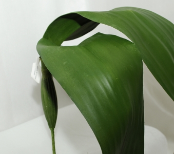 Foglie Giganti Di Orchidea Da 112 Cm
