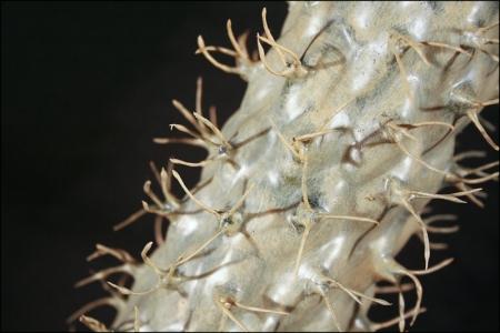 Cactus Large Da 80 Cm Foglie 22 Cm Da Interno