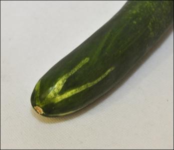 Zucchina Artificiale