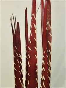 Palm Leaves Con Rafia