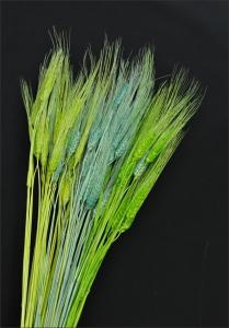Verde-Giallo