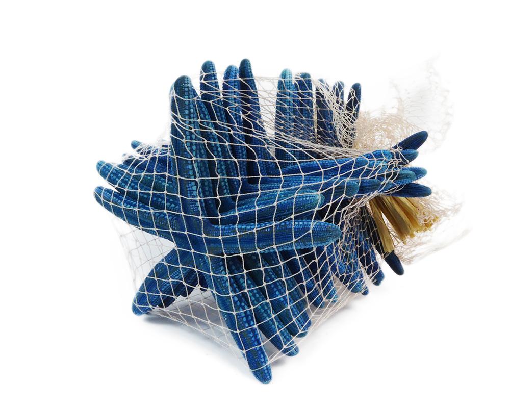 Pz 15 Stella Marina Linkia Cm 7/10 Blu Naturali Decorazione Linea Mare