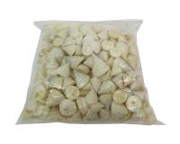 Conchiglie Echinellopsis Gr 500