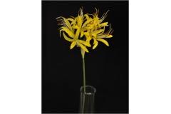 Nerine Lily Seta 8 Fiori 70 Cm