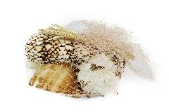 Pz 6 Conchiglie Assortite Grandi 8-9 Cm Naturali Decorazione Linea Mare